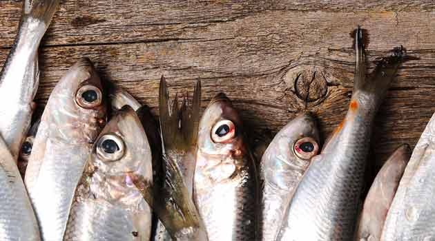 Aula de pescados e peixaria