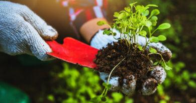 Dicas e ideias para ter a sua horta em casa